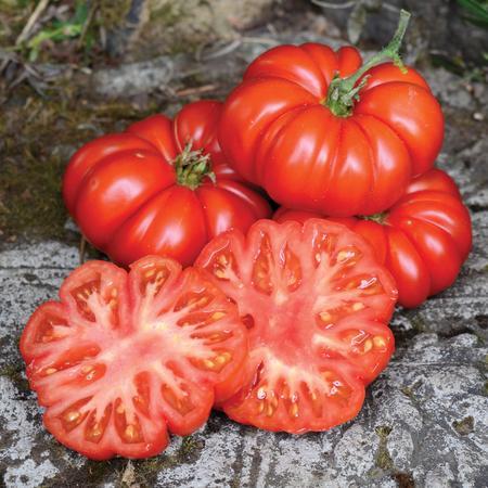 Costoluto Fiorentino tomatoes